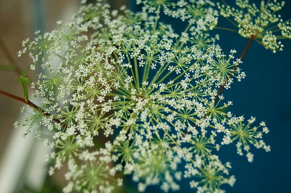 Flowers, Spring, Seonyudo