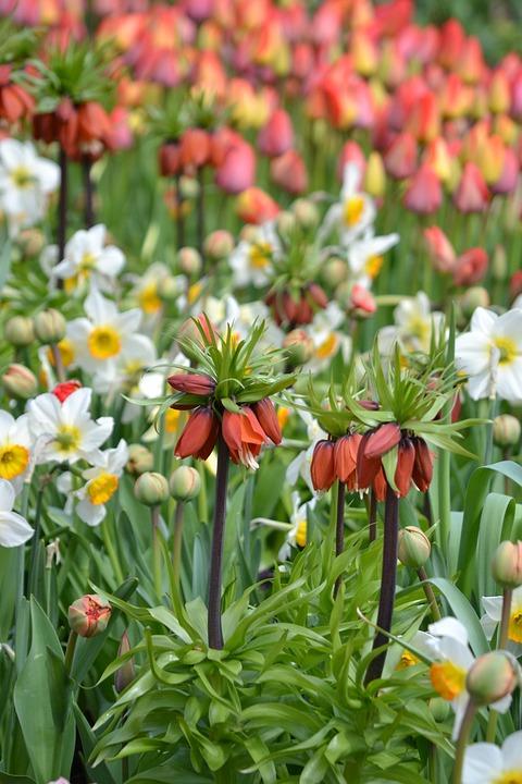 Spring, Sea Of Flowers, Flowers, Garden, Spring Flowers
