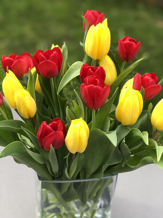 Tulips, Flowers, Spring, Bouquet, Spring Flowers