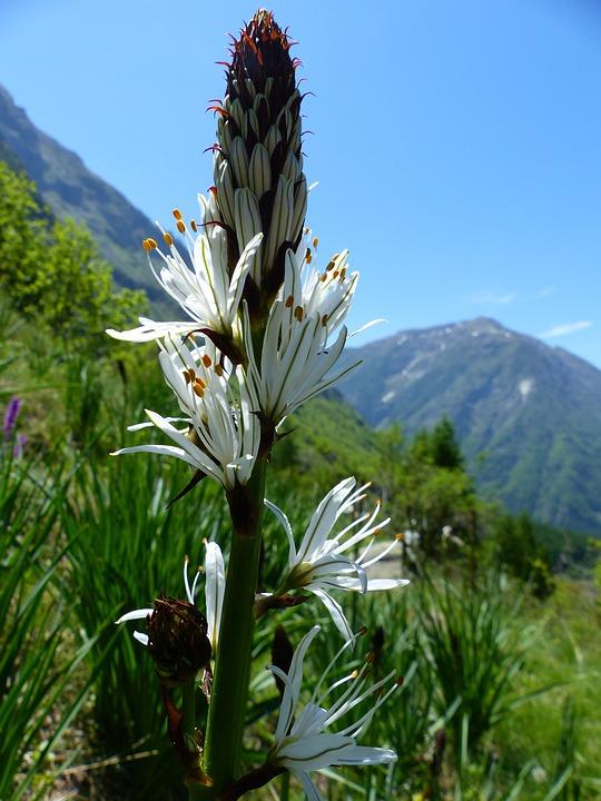 Free Photo Flowers Spring White Mountain Nature Wild Flowers Max Pixel