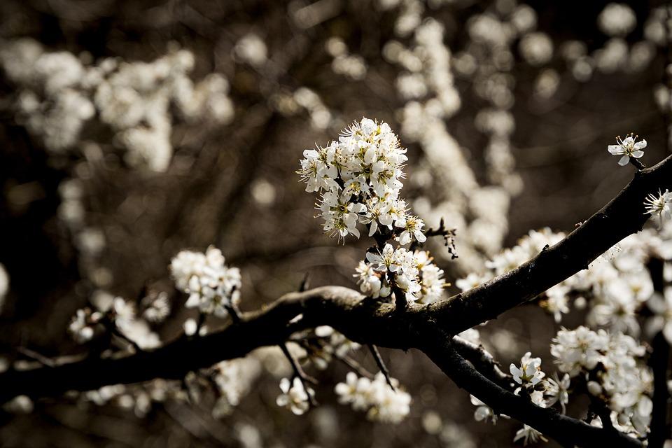 Flowers, Tree, Branch, White, Spring
