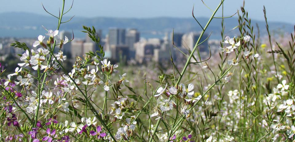 Cityscape, Flowers, Nature, Spring, Wildflowers