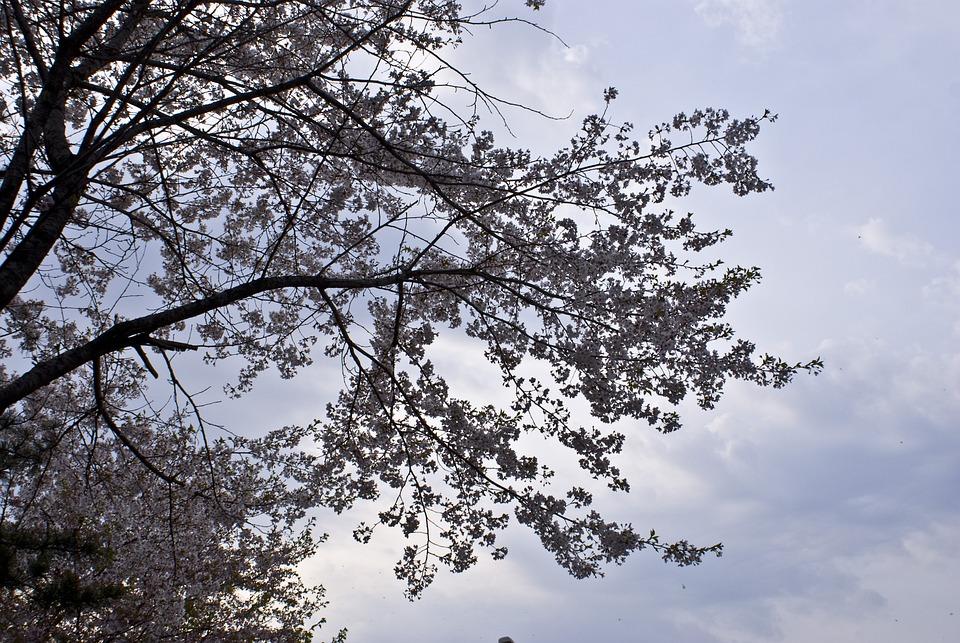 Flowers, Spring, Wood