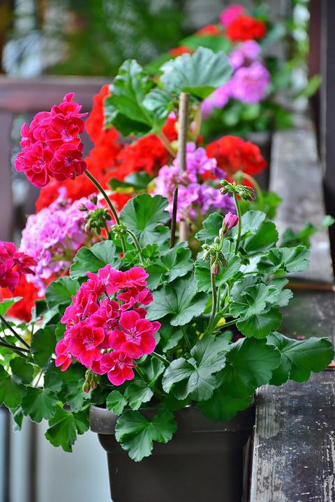 Balcony, Flower Box, Flowers Summer, Bloom, Geranium
