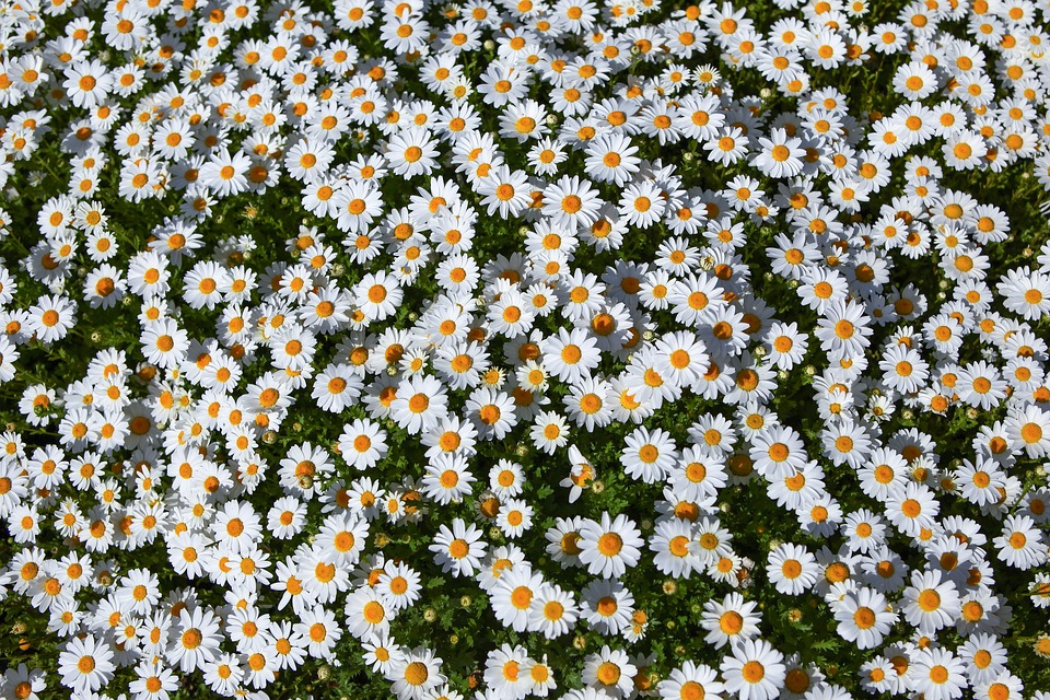 Flowers, Nature, Plants, Summer, Floral, Gujeolcho
