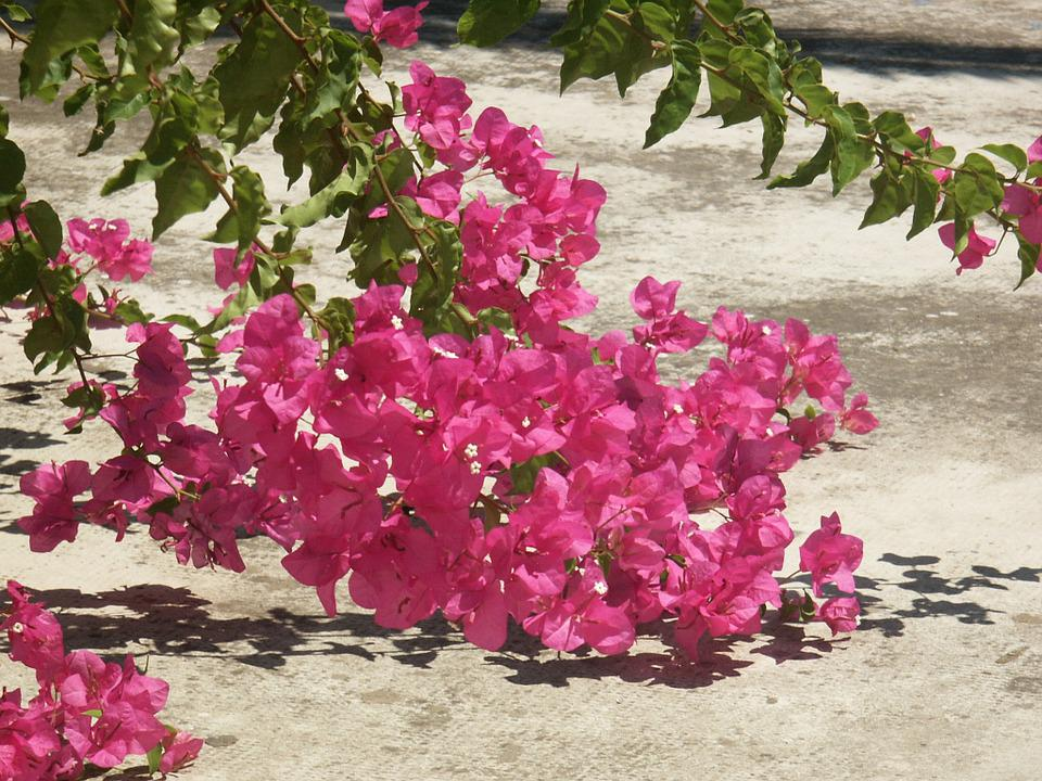Flowers, Pink, Summer, Public Garden, Tree, Nature