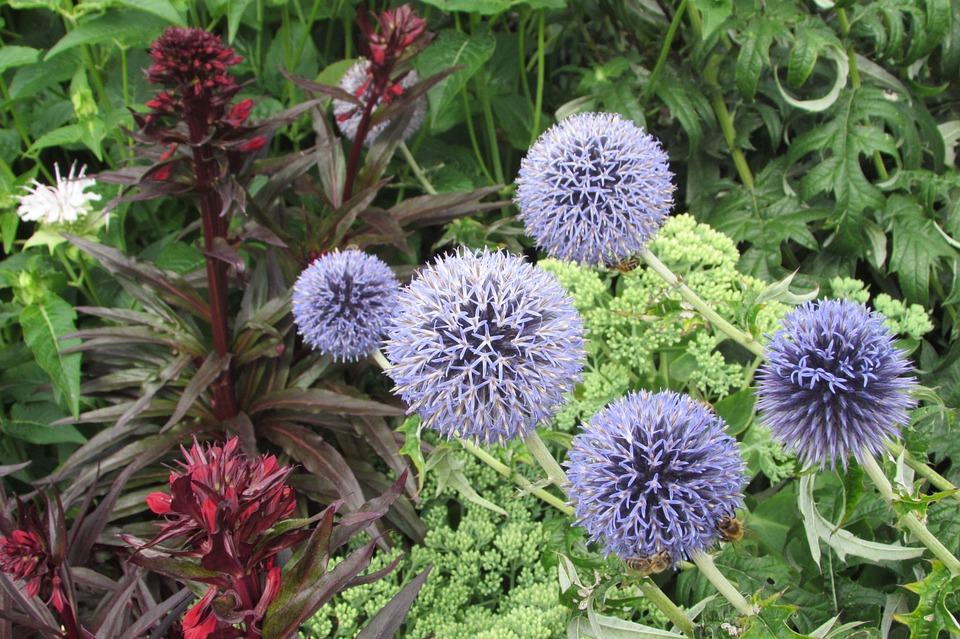 Flowers, Spiky, Botany, Gardening, Summer, Bouquet