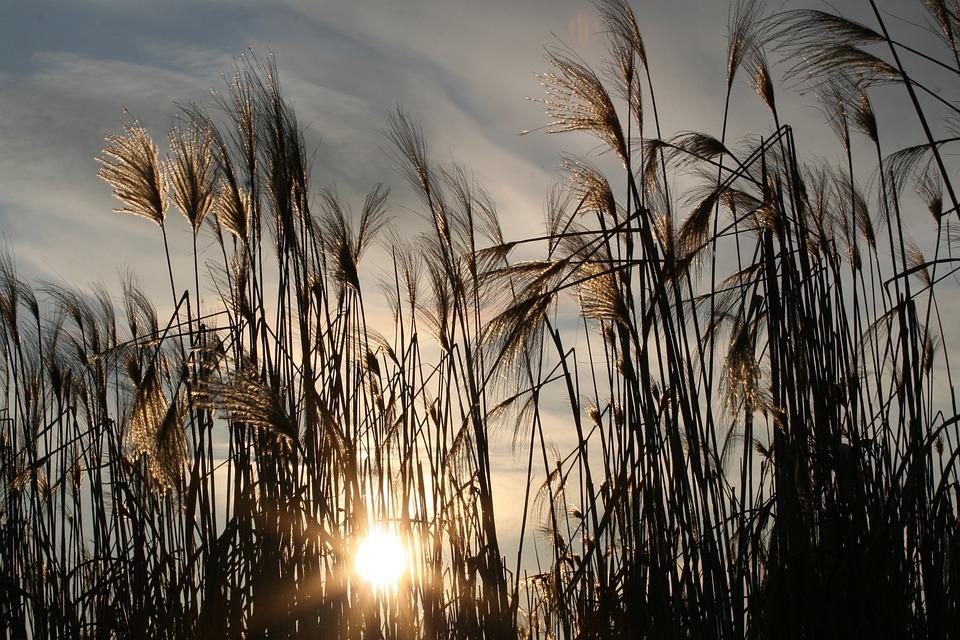 Grasses, Meadow, Sunset, Sunlight, Flowers, Bloom