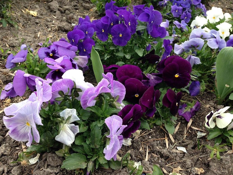 Flowers, Spring, Sunshine