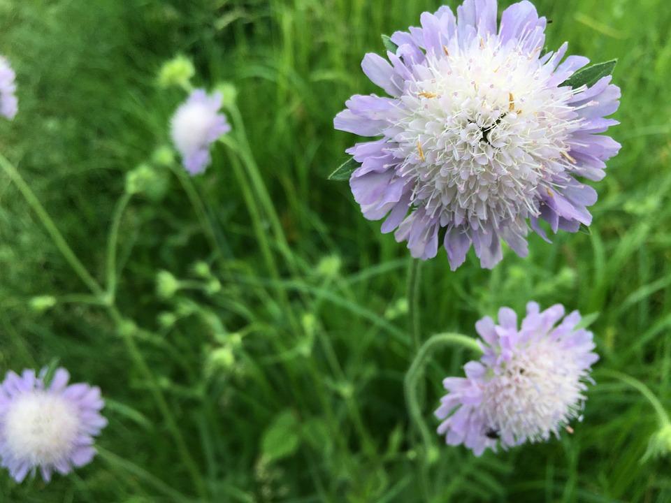 Meadow, Grass, Closeup, Macro, Thistle, Flowers, Nature