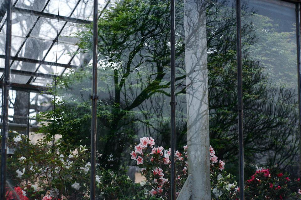 Window, Reflection, Botanical Garden, Flowers, Tree