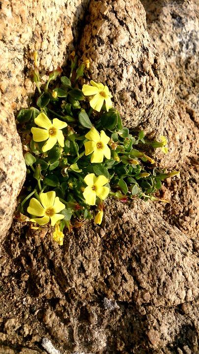 Flowers, Nature, Chile, Winter, Contemplation, Trip