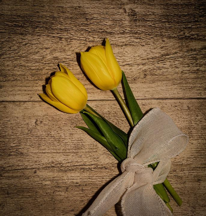 Tulips, Flowers, Yellow Flowers, Cut Flowers