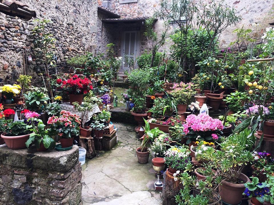 Anghiari, Tuscan Village, Tuscany, Flowers
