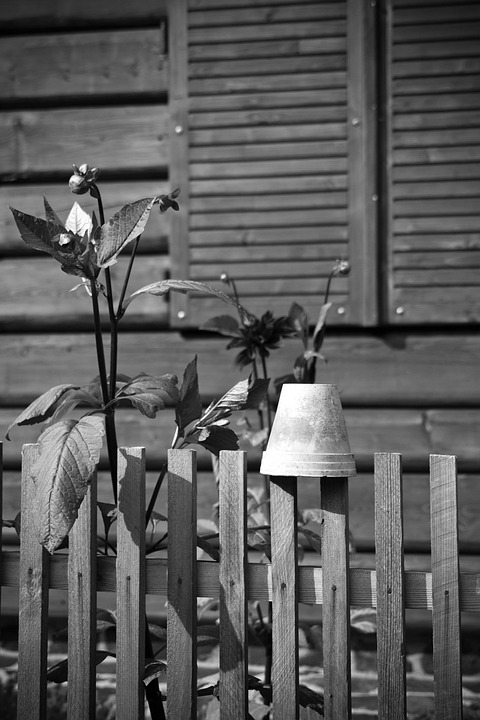Wooden, Fence, Flowers, Pot, Village, House, Home