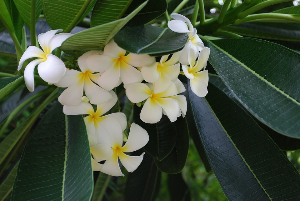 Flowers Tropical Plants Closeup White