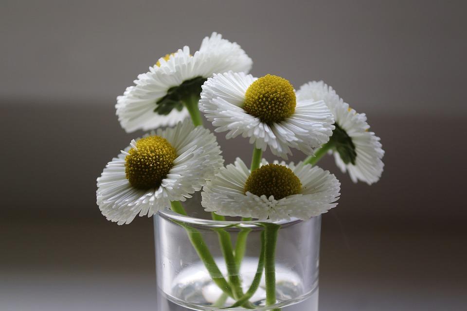 Bellies, Daisy, Glass, Pick, Flowers, White, Daisies