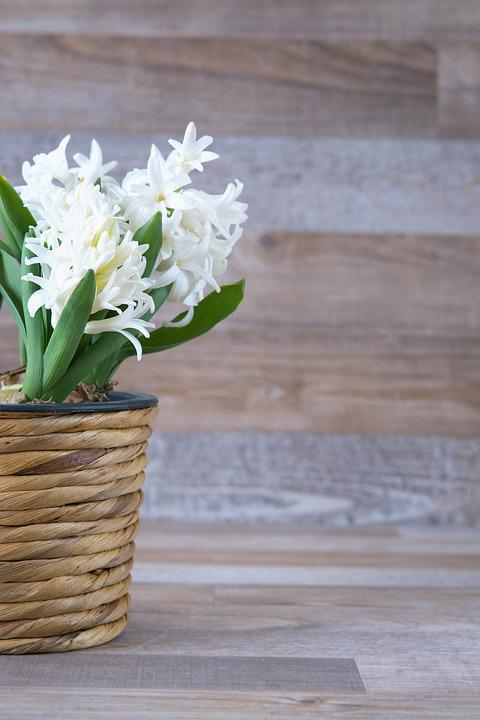 Hyacinth, Flower, Flowers, White, Fragrant Flower