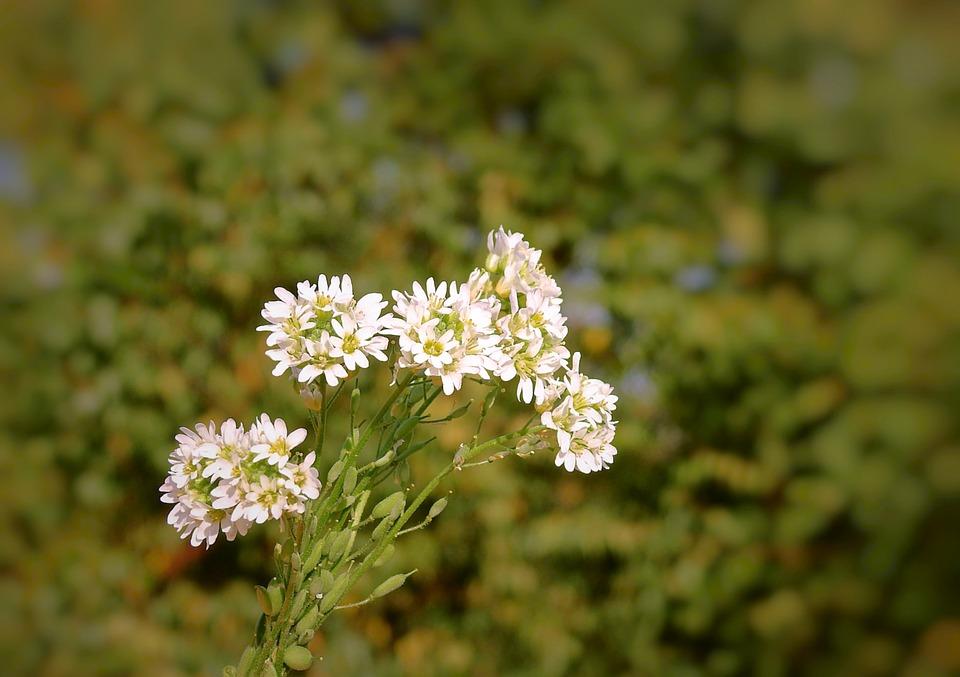 Free photo flowers white meadow autumn the beasts of the field max meadow flowers the beasts of the field white autumn mightylinksfo
