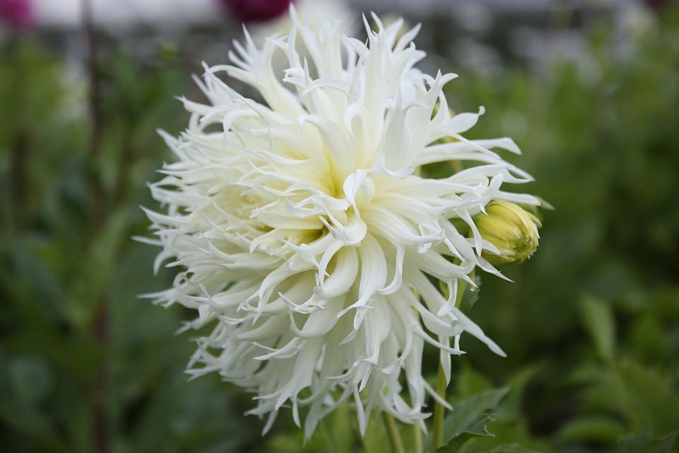 Flower, Garden, Spring, Flowers, White