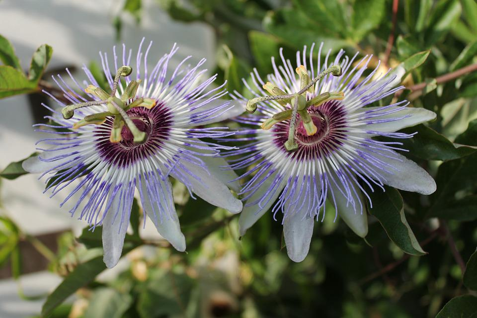 Flowers, Nature, Plant, Close, Purple, Wild Flower