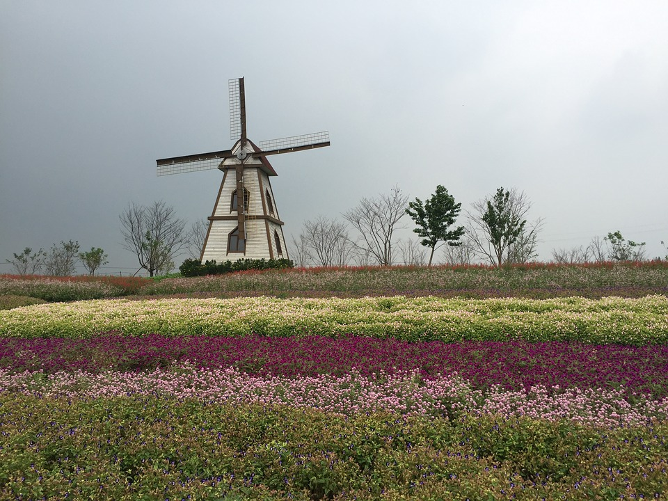 Yangzhou, Wedding Photography Scene, Windmill, Flowers