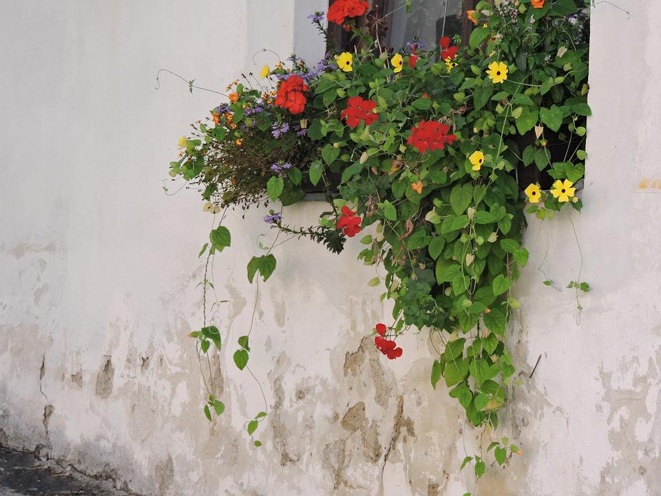 Flowers, House Wall, Window, Old House