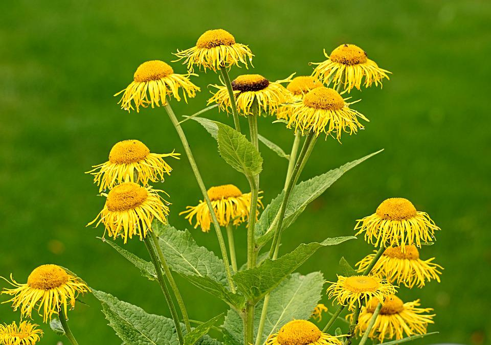 Flower, Yellow, Flowers