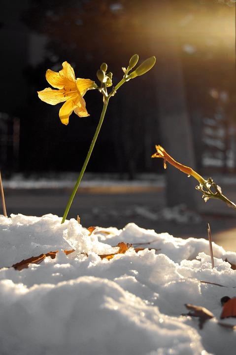Flower, Flowers, Plant, Yellow Flower