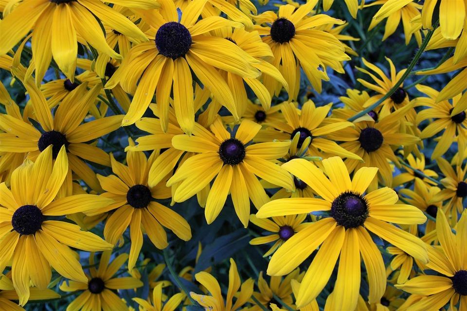 Flowers, Yellow, Yellow Flowers, Summer Flowers