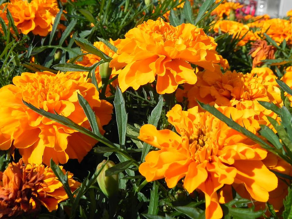 Orange, Flowers, Blossom, Bloom, Orange Flowers, Yellow