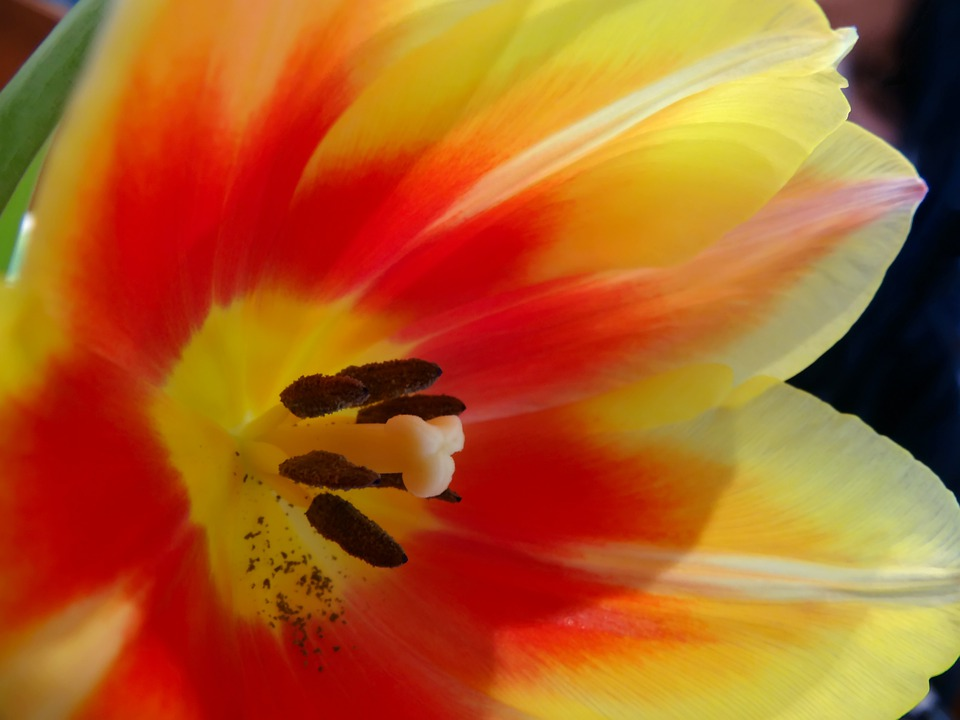 Flowers, Yellow, Red, Black, Petals, Flora, Petal