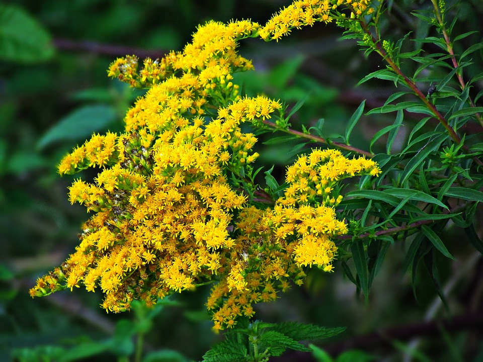 Flowers, Flower, Yellow, Plant, Nature
