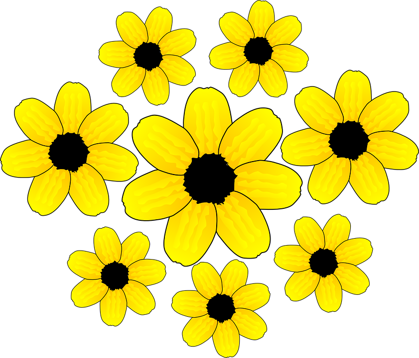 Sunflowers, Flowers, Blossom, Bloom, Yellow