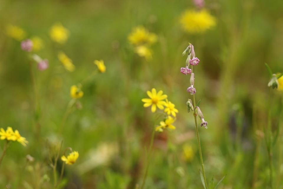 Flowers, Purple, Yellow, Yellow Weed, Field