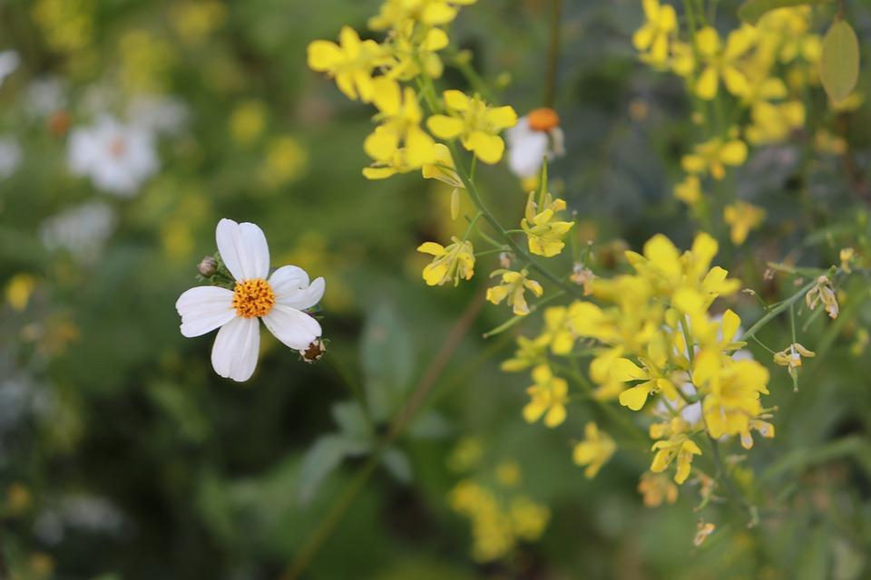 Flowers, White, Yellow