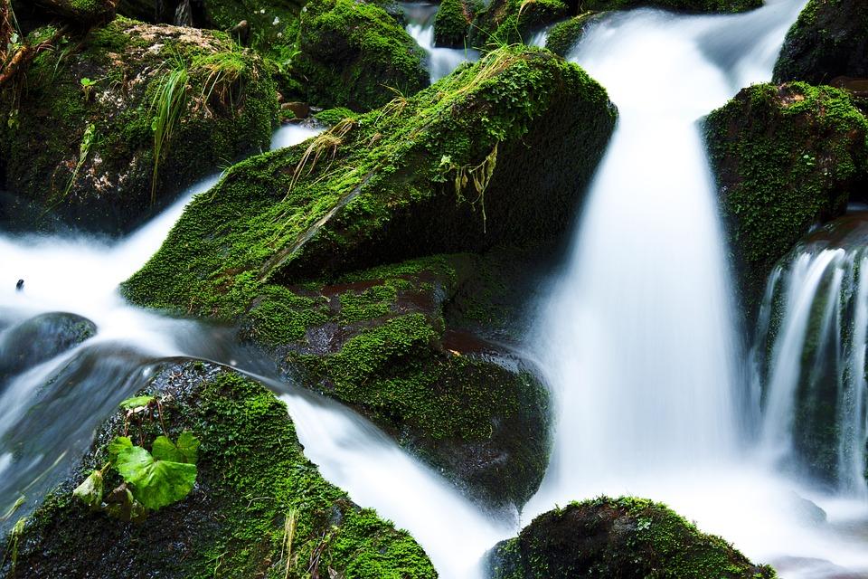 Creek, Falls, Flow, Flowing, Forest, Green, Landscape