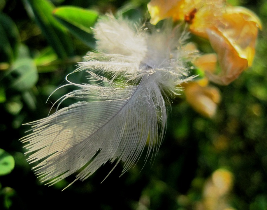 Feather, White, Soft, Bird, Wing, Light, Plume, Fluffy