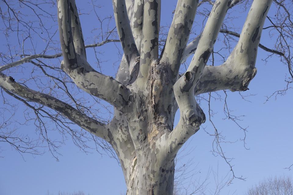 Tree, Sky, Winter, Flushing Meadow Park, New York City