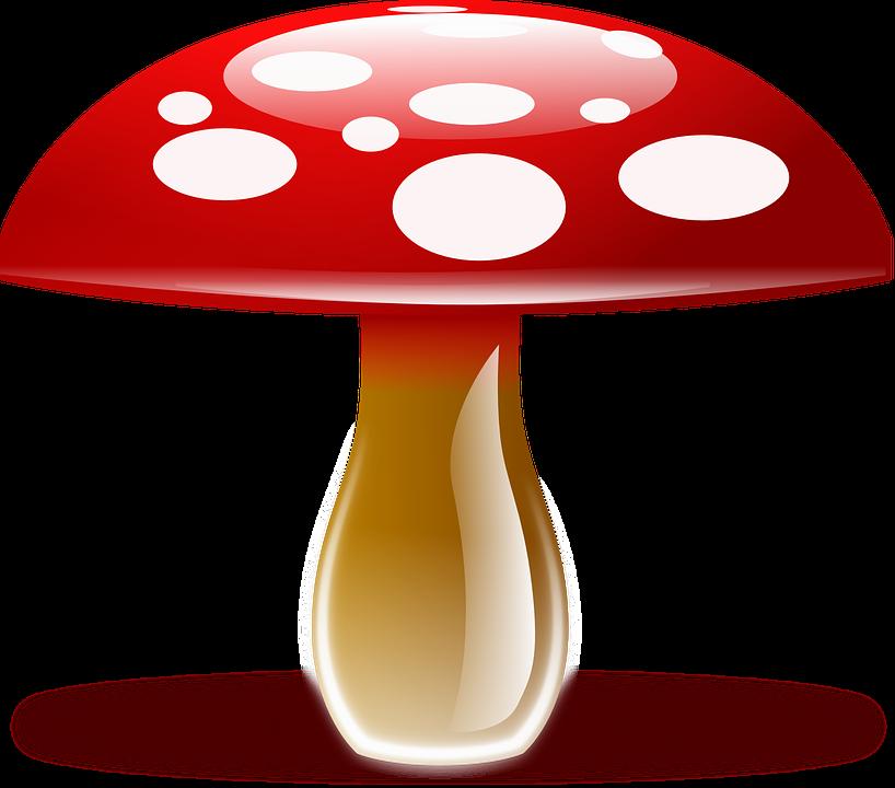 Amanita Muscaria, Fly Agaric, Fungus, Fly Amanita