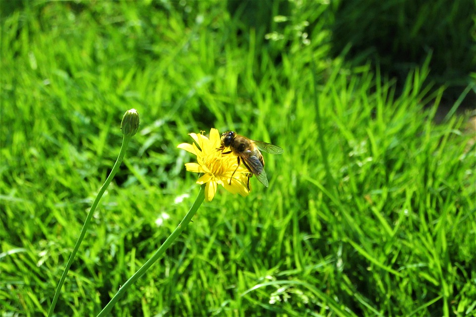 Yellow, Wild Flower, Fly, Bug, Flower, Animal, Wing