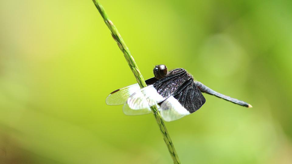 Dragon Fly, Insect, Nature, Dragonfly, Bug, Fly, Dragon