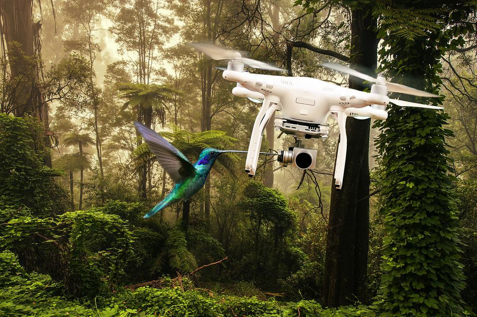 Drone, Bird, Fly, Forest, Photo Montage, Wood, Tree