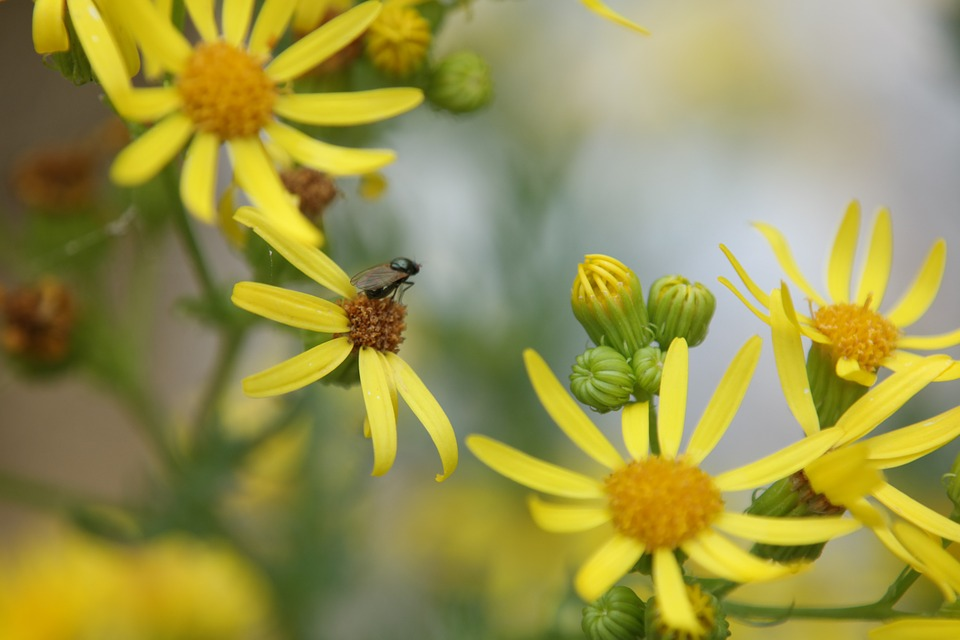 Fly, Flower, Nature, Spring, Bug, Yellow Flowers