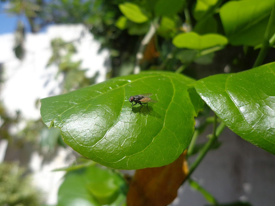 Fly, Fly On Leave, Insects, Insect, Wing, Wildlife, Bug
