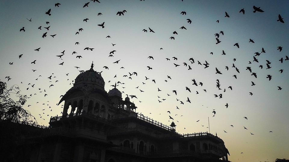 Fly Back Home, Birds, Fly, Flying, Sky, Flight, Home