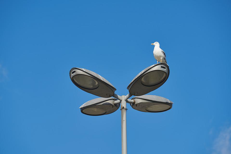 Seagull, Bird, Animal, Feather, Gaga, Wing, Fly, Nature
