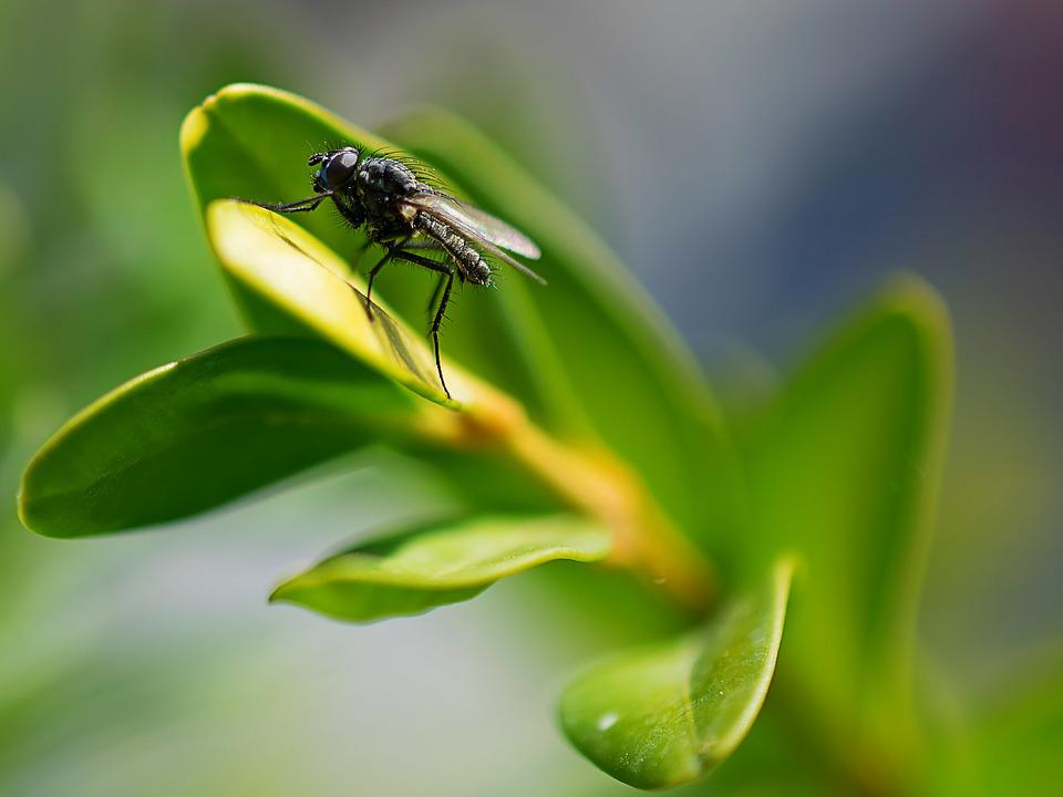 Fly, Insect, Nature, Flower, Close