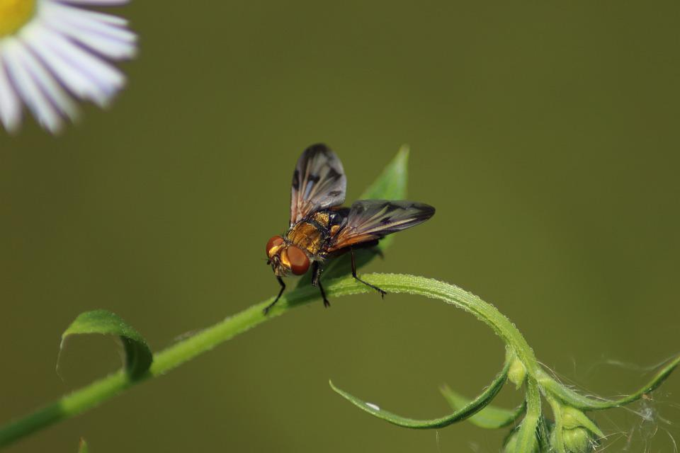 Insect, Nature, Wing, Fly, Krupnyj Plan, Living Nature