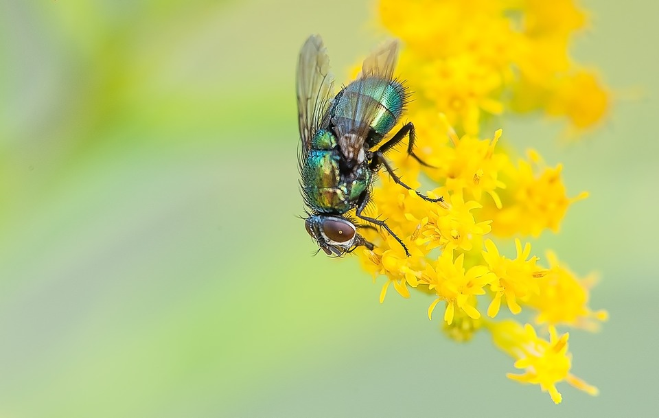 Fly, Macro, Nature, Insect, Animal, Close Up